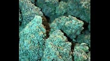 christmas nuggets of inspiration marijuana to get you.